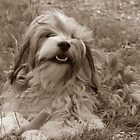 Tibetan Terrier 4 by Dragonfairy