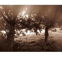 Glade Photographic Print