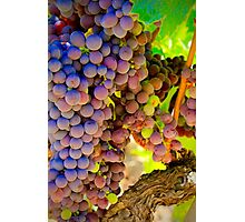 Light in the Vineyard Photographic Print