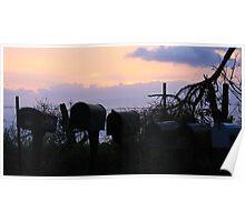 Maui Mailboxes @ Sunrise Poster