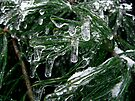 Frozen Tears by Marcia Rubin
