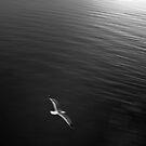 Light On You Free Soul by Dragomir Vukovic
