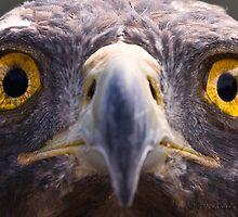 Golden Eagle by PixlPixi