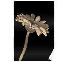 Flower in sepia tone Poster