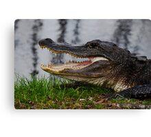 Gator Canvas Print