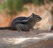 Chipmunk by SHickman