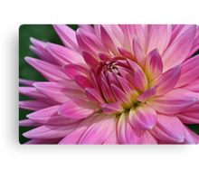 Pointedly Pink Canvas Print