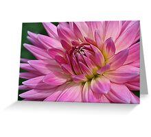 Pointedly Pink Greeting Card