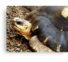 T for Tortoise Metal Print