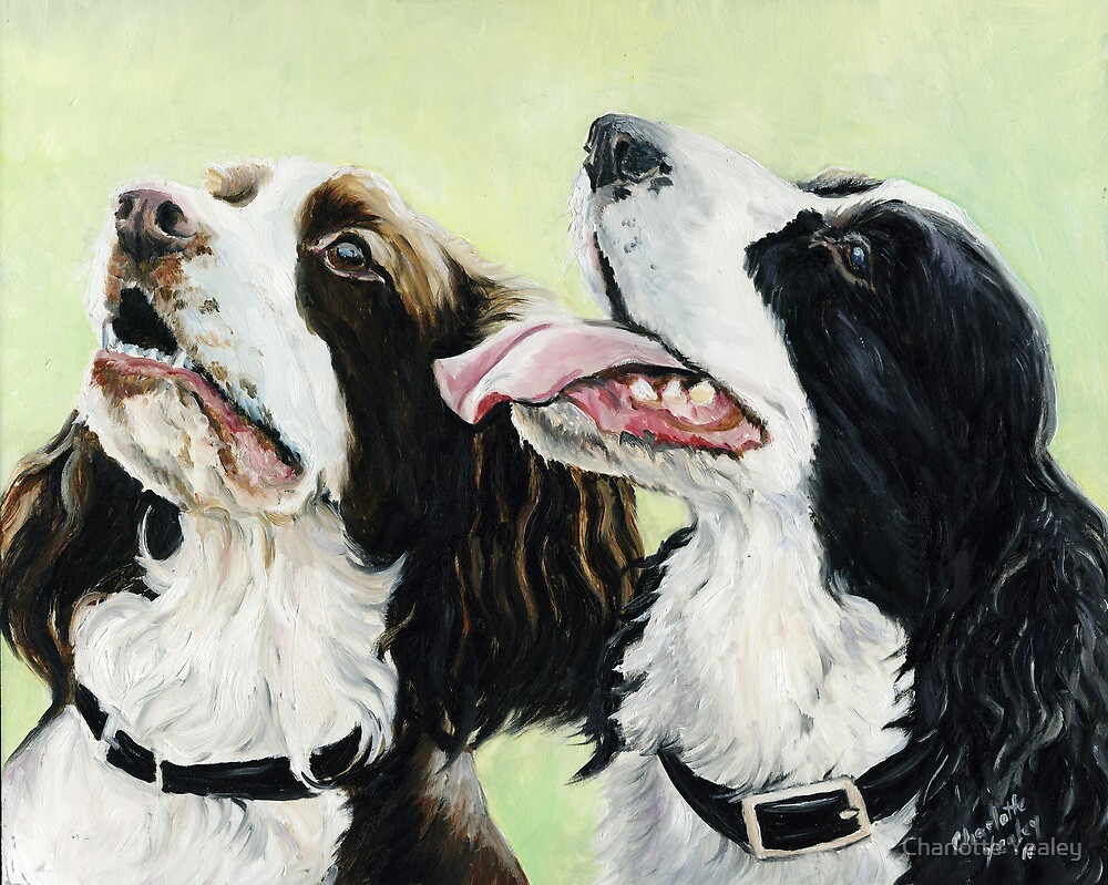 Springer Beggers by Charlotte Yealey