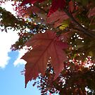 Autumn Glow by Natalie Cooper