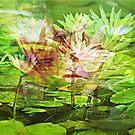 Choir of Water Lilies by Scott Mitchell