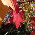 Autumn Glow IV by Natalie Cooper
