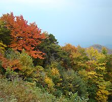 Fall colors on the Blue Ridge Parkway by BLemley