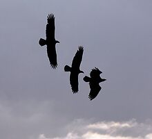 EAGLES DEFENDING TERRITORY SILHOUETTE by TomBaumker