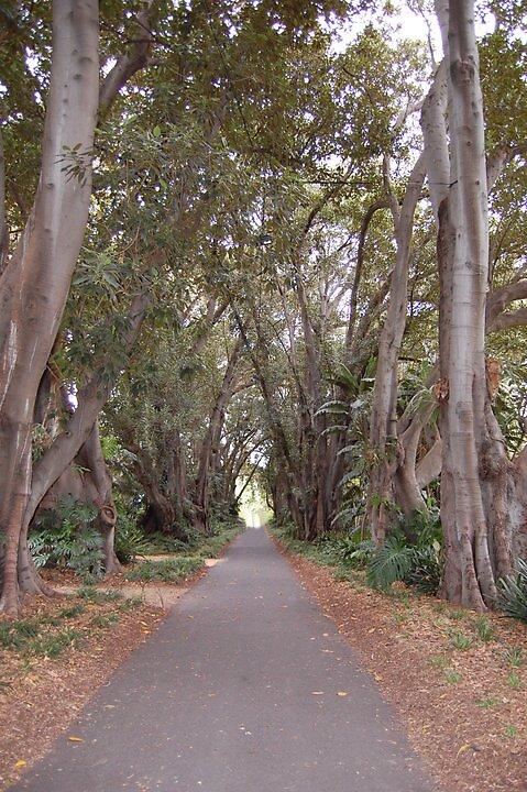 The Giants - Botanic Gardens Adelaide by xXx0xXx