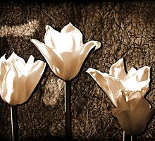 Glowing Tulips by James Brotherton