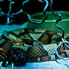 Copperhead pit viper by thermosoflask