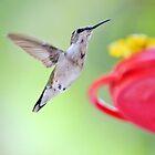 Bird Song by Scott Mitchell