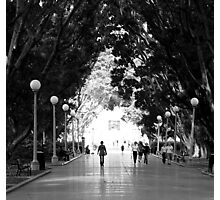 A Walk in the Park. Photographic Print