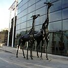 Giraffes near Omni Centre, Edinburgh by biddumy