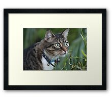 Hmmm Can I Get It! Framed Print