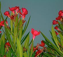 Oriental Florals by Julie Marks