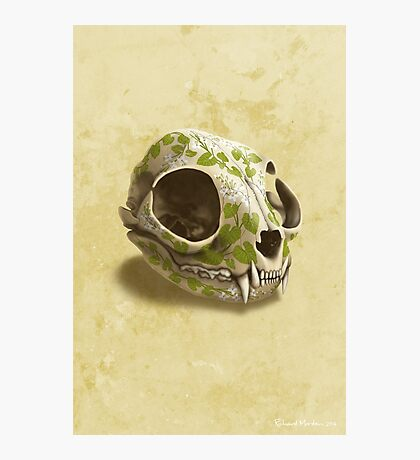 cat skull decorated with wasabi flowers Photographic Print