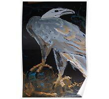 Sea Eagle - bird of prey - Australia Poster
