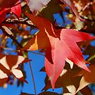 Autumn Hues by Natalie Cooper