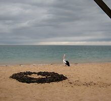Waiting for the Dolphins - Monkey Mia, Western Australia, 2010 by Elizabeth Sheppard