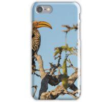 Hornbill - Kruger iPhone Case/Skin