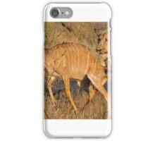 Lion - Kruger iPhone Case/Skin