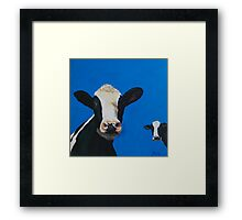 Devon cows Framed Print