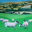 Devon sheep by Jenny Urquhart