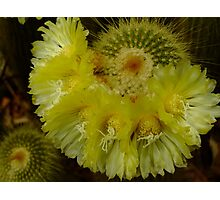 Cactus Flower! Photographic Print