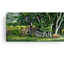 """""""By The Rail Fence"""" Canvas Print"""