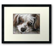 Sweet Suzie Framed Print