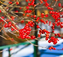 Simply Berries by Trudy Wilkerson