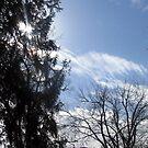 Spring Skies by Kristin Sparks