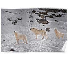 Wolf Karaoke Poster