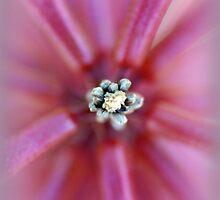 Pink! by Saija  Lehtonen