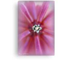 Pink! Canvas Print
