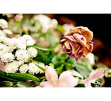 Wilted Rose Photographic Print