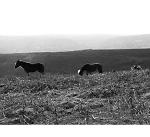 Black Mountain Ponies Photographic Print