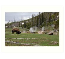 Bison at Geyser Basin Art Print