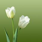 White Tulips by GardenJoy