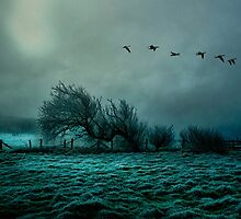 The Last Flight Home by Tarrby