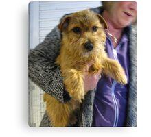 Norfolk Terrier Canvas Print