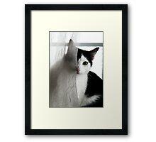 Clifford Framed Print